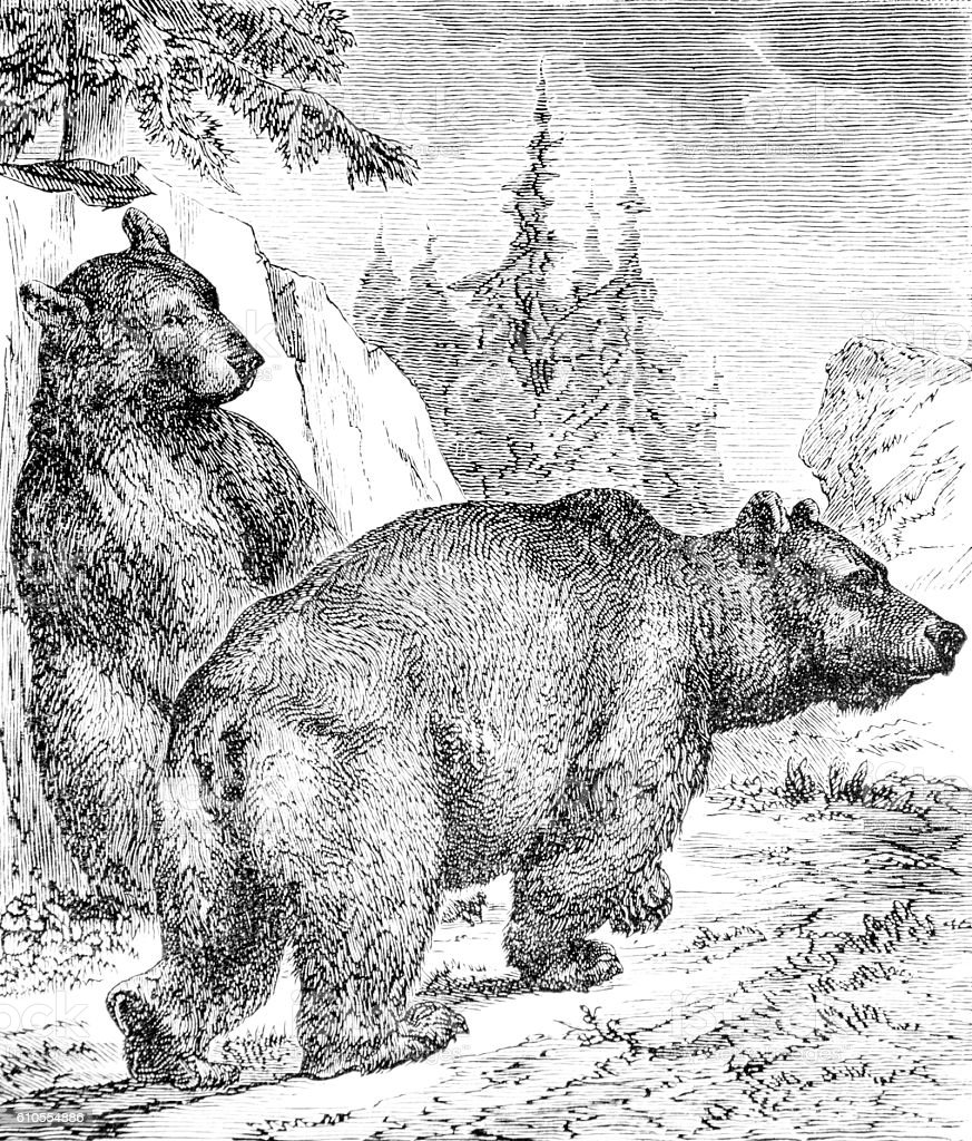Hand drawn illustration of bears stock photo