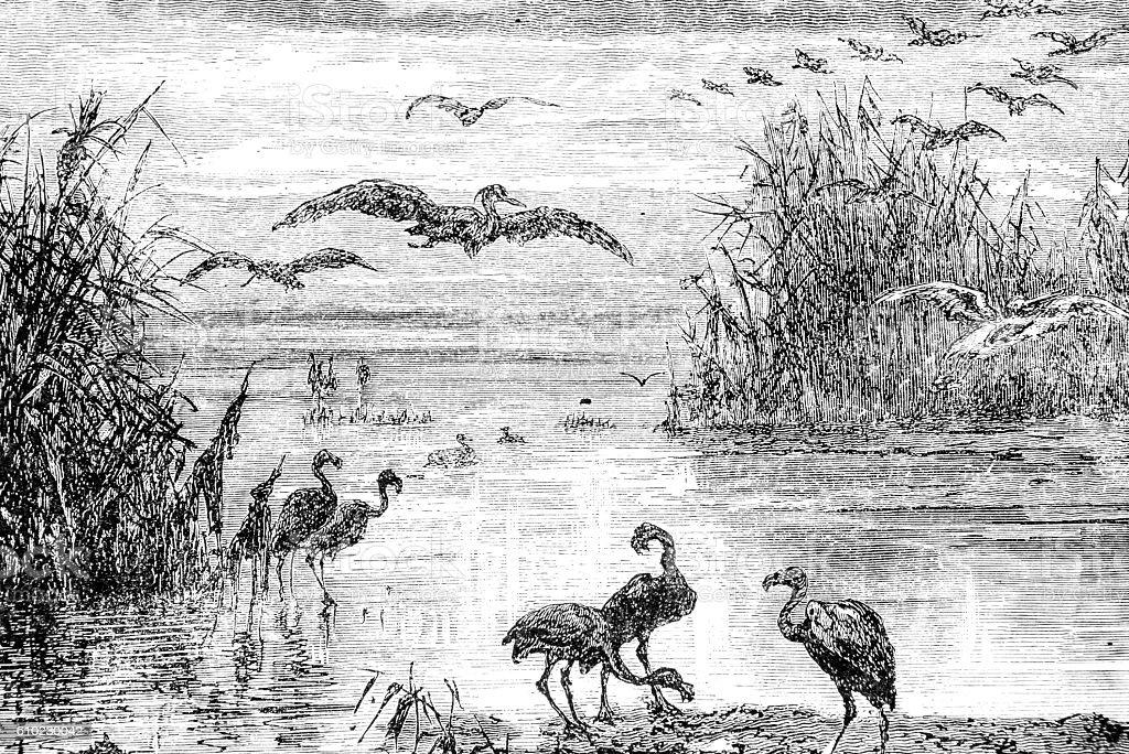 Hand drawn illustration of flamingos stock photo