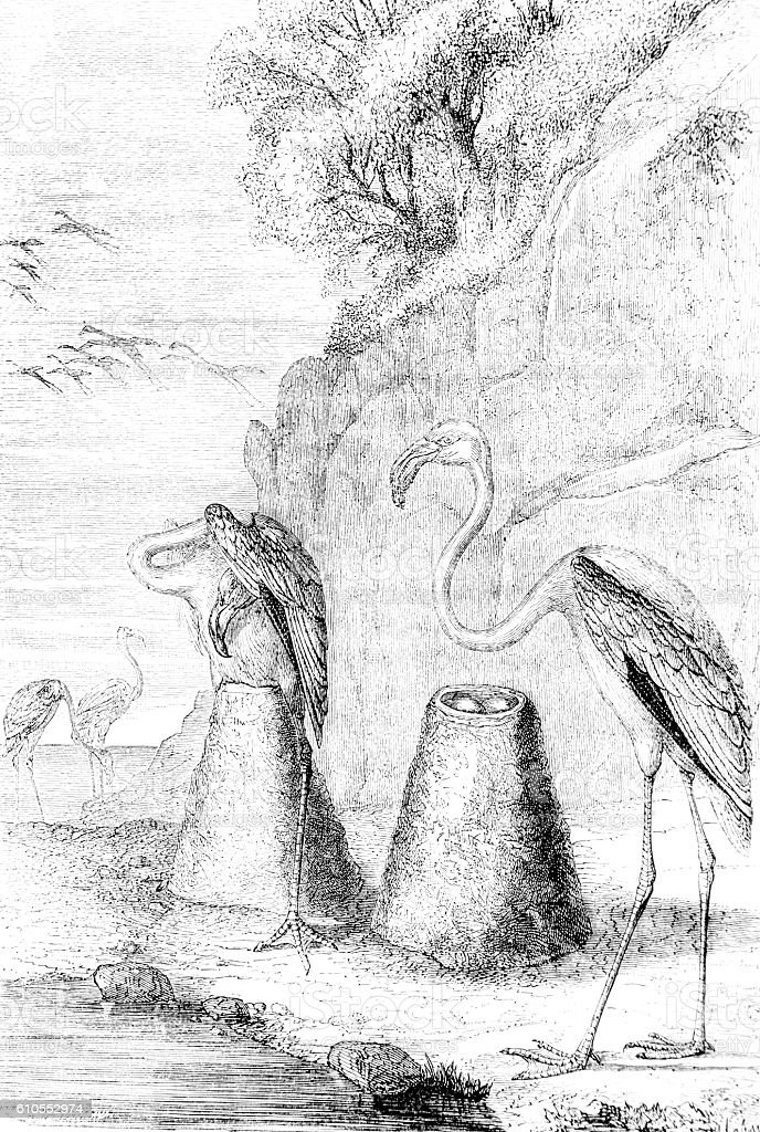 Hand drawn illustration of nesting flamingos stock photo