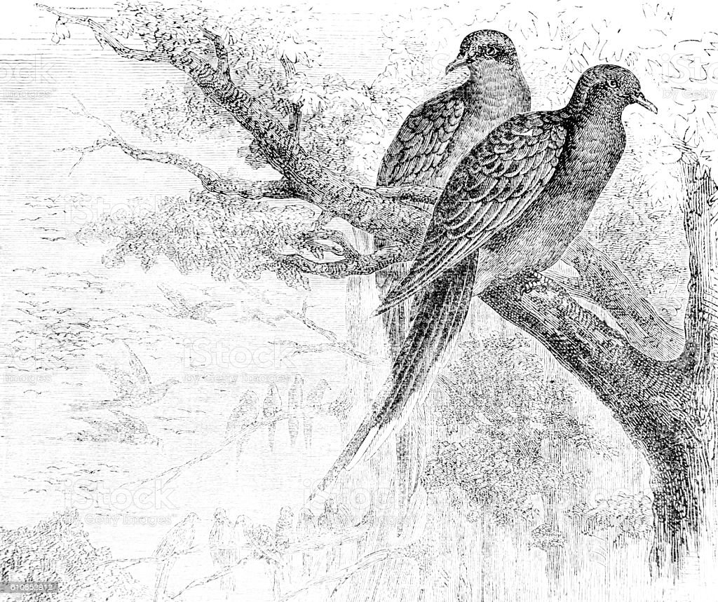 Hand drawn illustration of pair of birds in tree stock photo