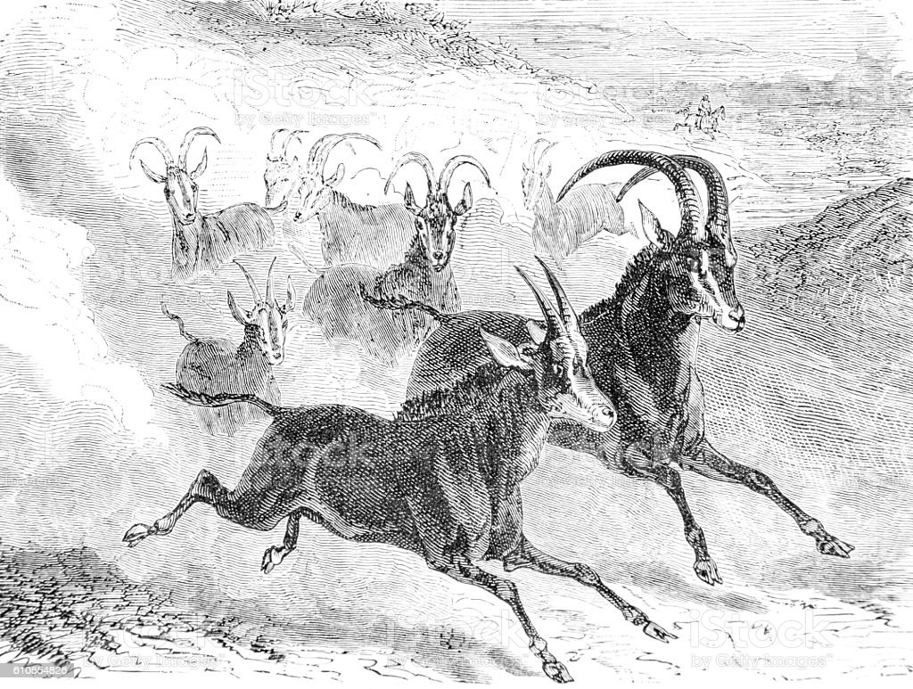 Hand drawn illustration of wild deer/gazelle stock photo