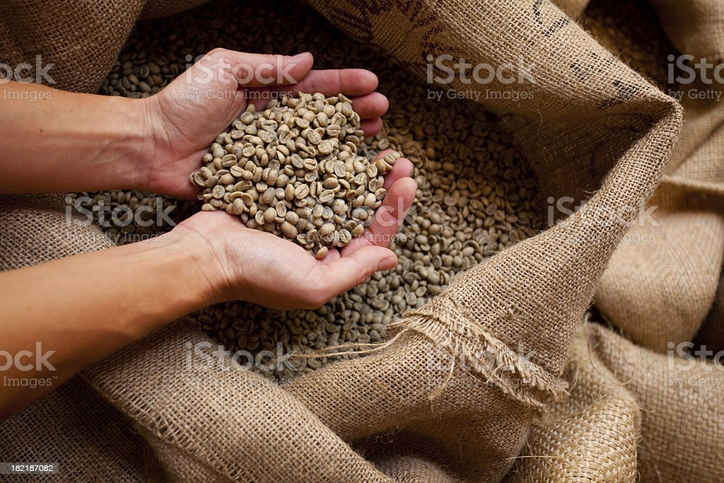 hand full of green coffee beans stock photo