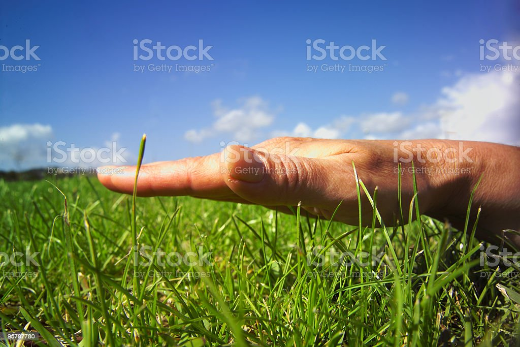 Hand, grass and sky. stock photo