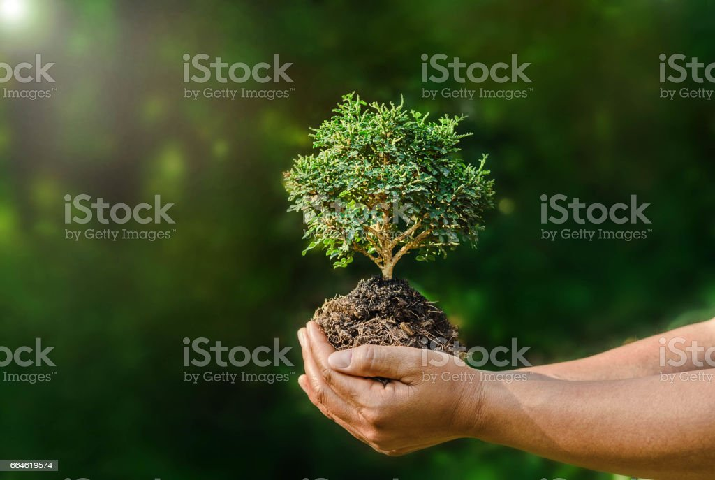 hand hold small plant on green background and sunshine stock photo