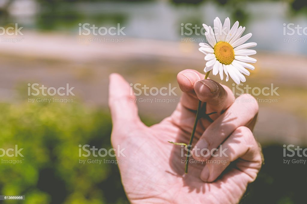 Hand holding a flower instead of a cigarette (ton stock photo