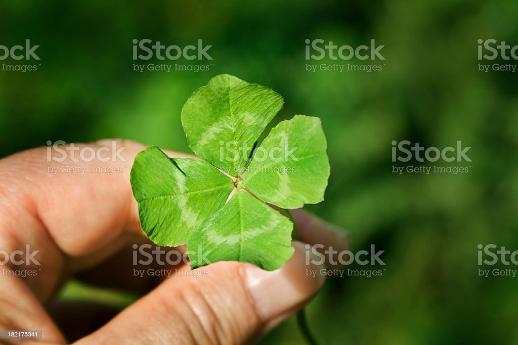 Hand Holding a Four Leaf Clover Green Good Luck Charm stock photo