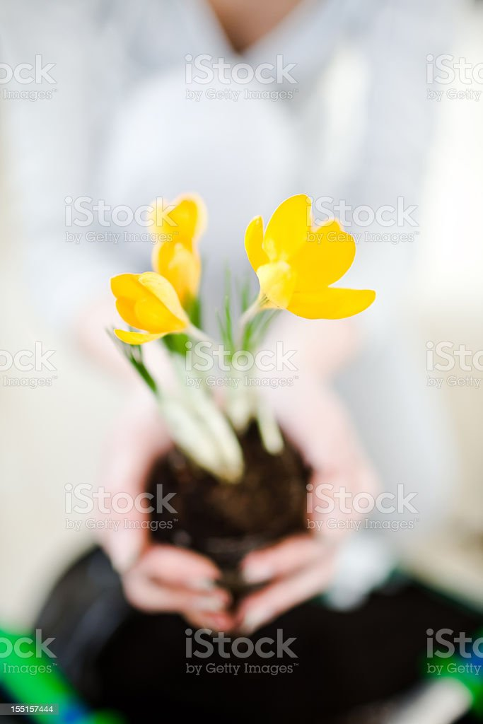 Hand holding a fresh young plant stock photo