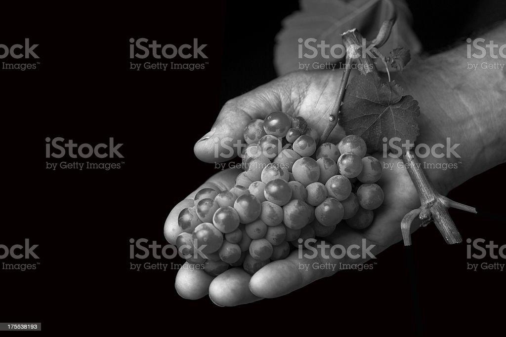hand holding a grape stock photo