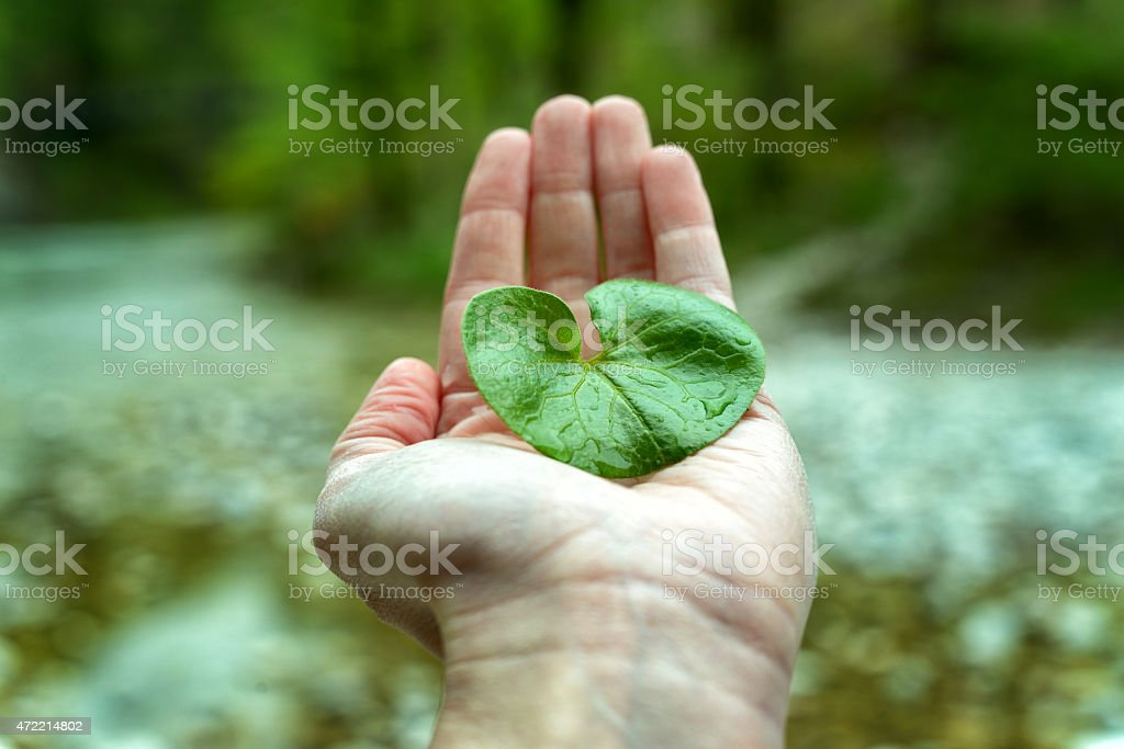 Hand holding a green leaf over the river stock photo