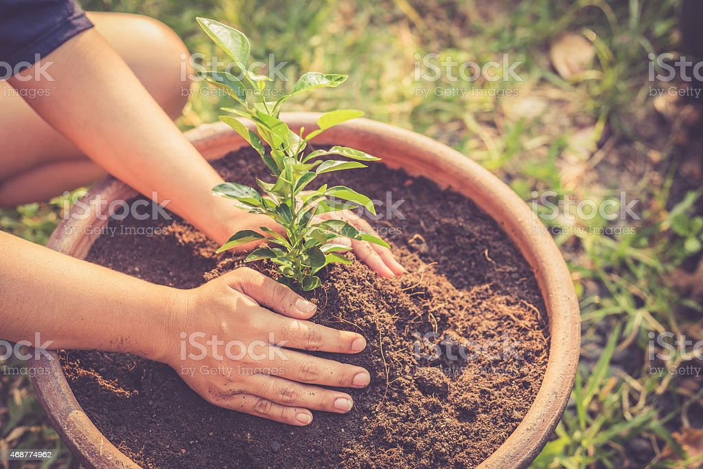 Hand holding a green plant on soil stock photo