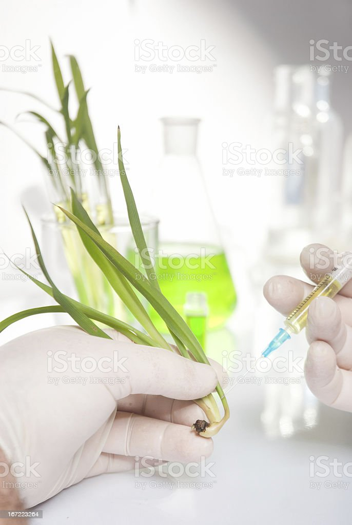 hand holding a plant stock photo