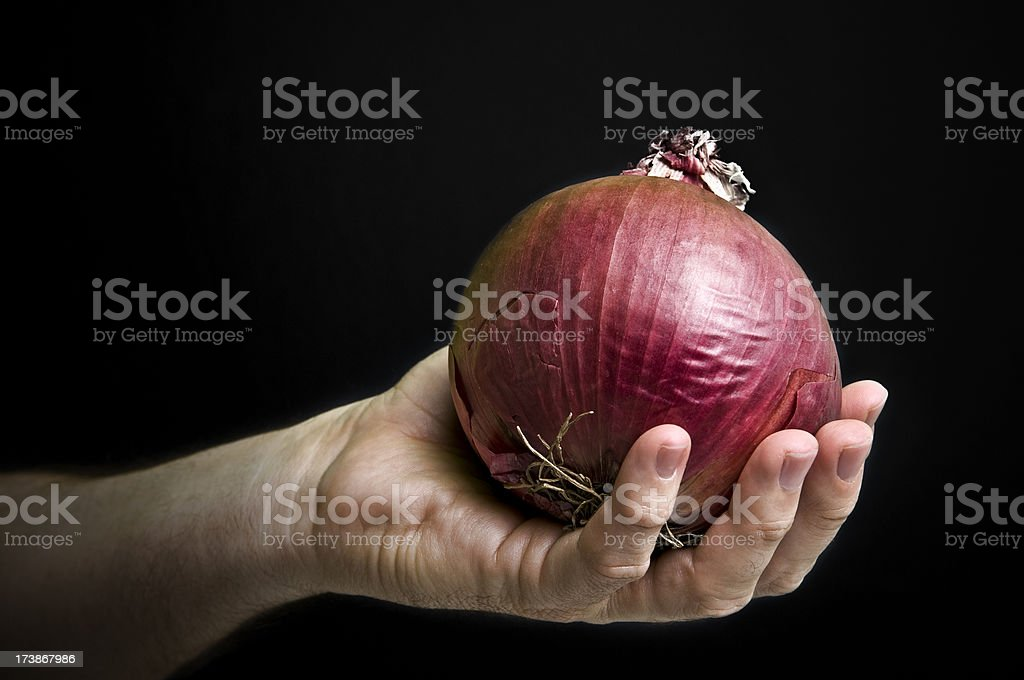 hand holding a red onion stock photo