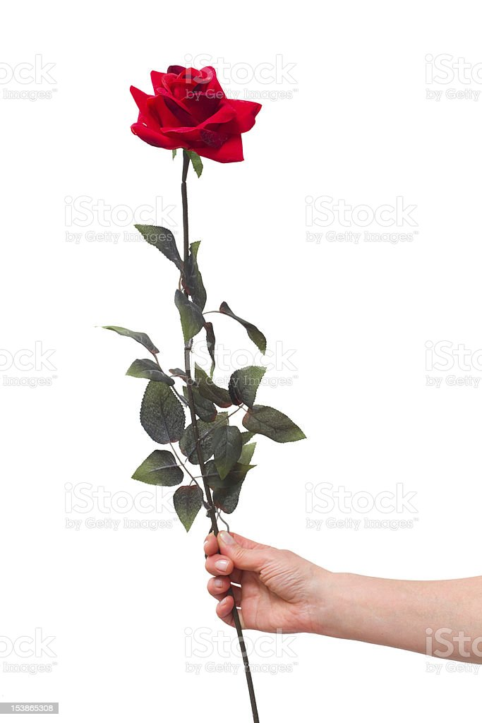 hand holding a red rose royalty-free stock photo