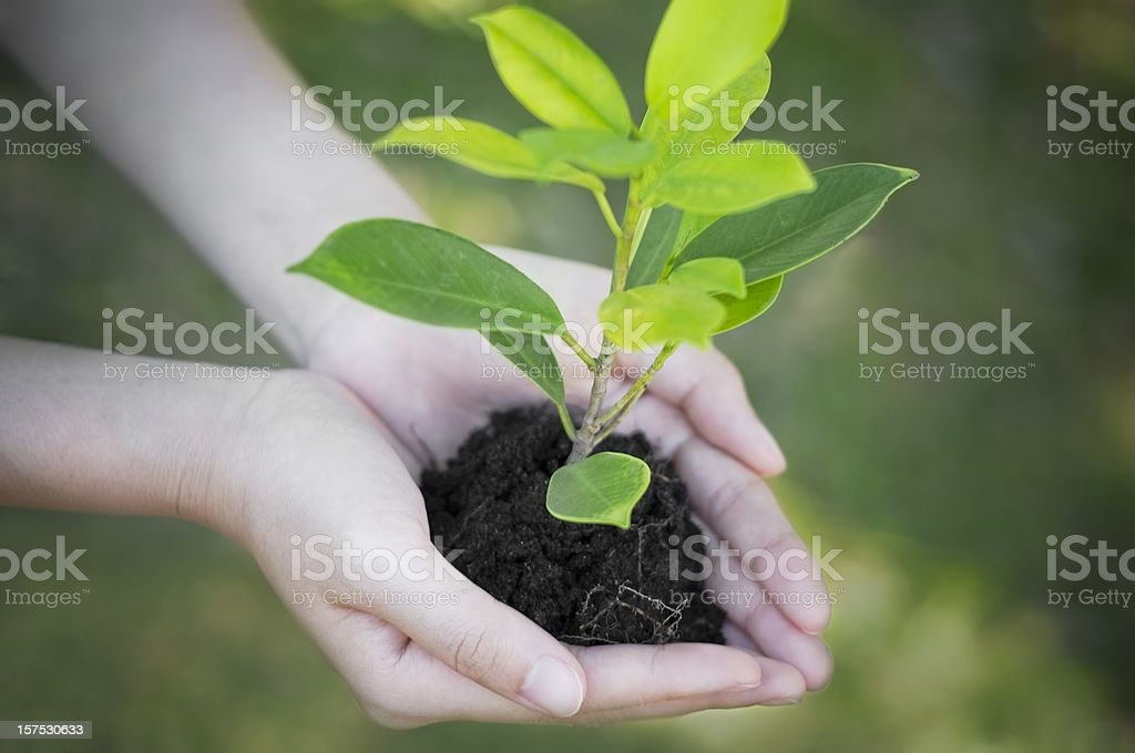Hand holding and planting new tree with green bokeh background royalty-free stock photo