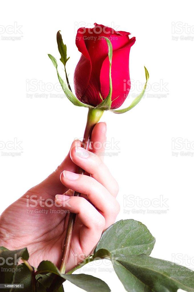 Mano agarrando hermosas rosas rojas stock foto e imagen de - Rosas rosas hermosas ...