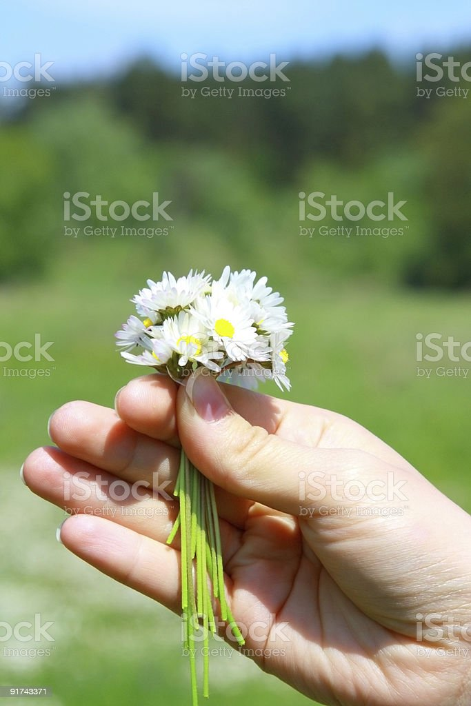 Hand holding field flowers royalty-free stock photo