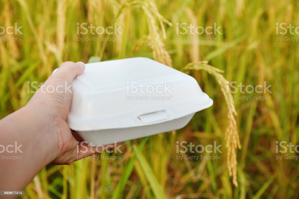 Hand holding foam packed lunch in the rice field. stock photo
