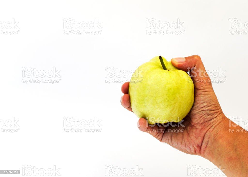 Hand holding fresh guava fruits on white background stock photo