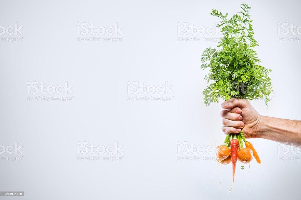Hand Holding Fresh Organic Carrots stock photo