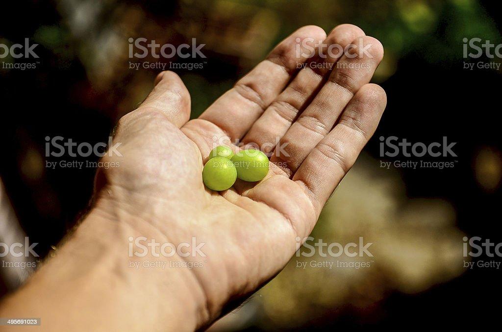 Hand Holding Grape Fruit - Healthy Lifestyle stock photo