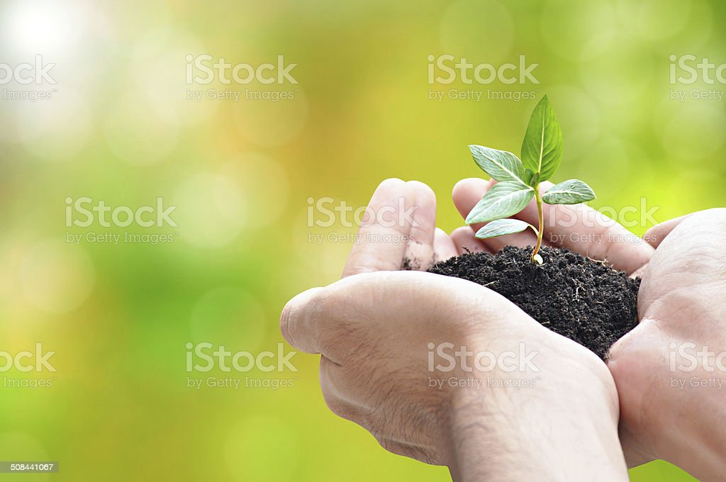 Hand holding green seedling with soil stock photo