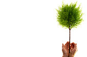 hand holding green tree, isolated on white
