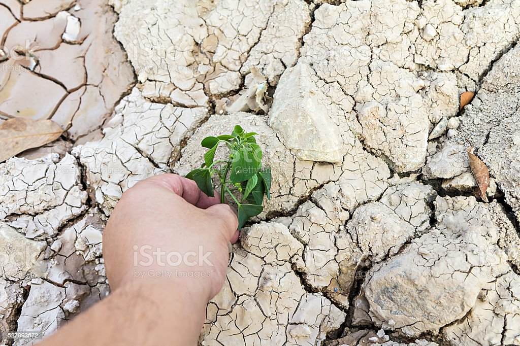 Hand holding green tree sprout on cracked ground stock photo