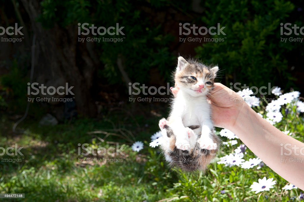 Hand holding kitten by scruff of neck in garden stock photo
