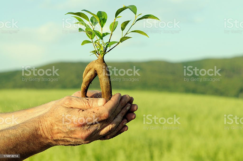 Hand Holding New Plant in Springtime royalty-free stock photo