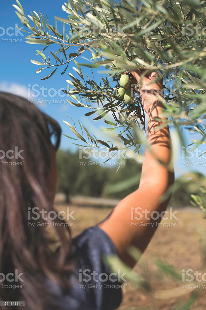 Hand holding olive branch stock photo