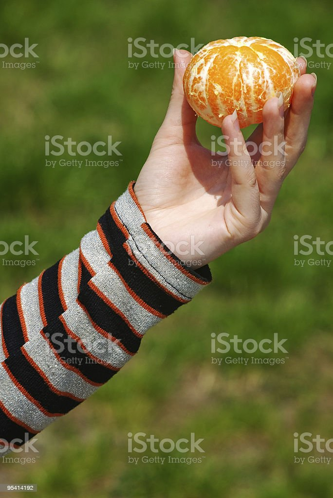 hand holding peeled mandarin orange stock photo
