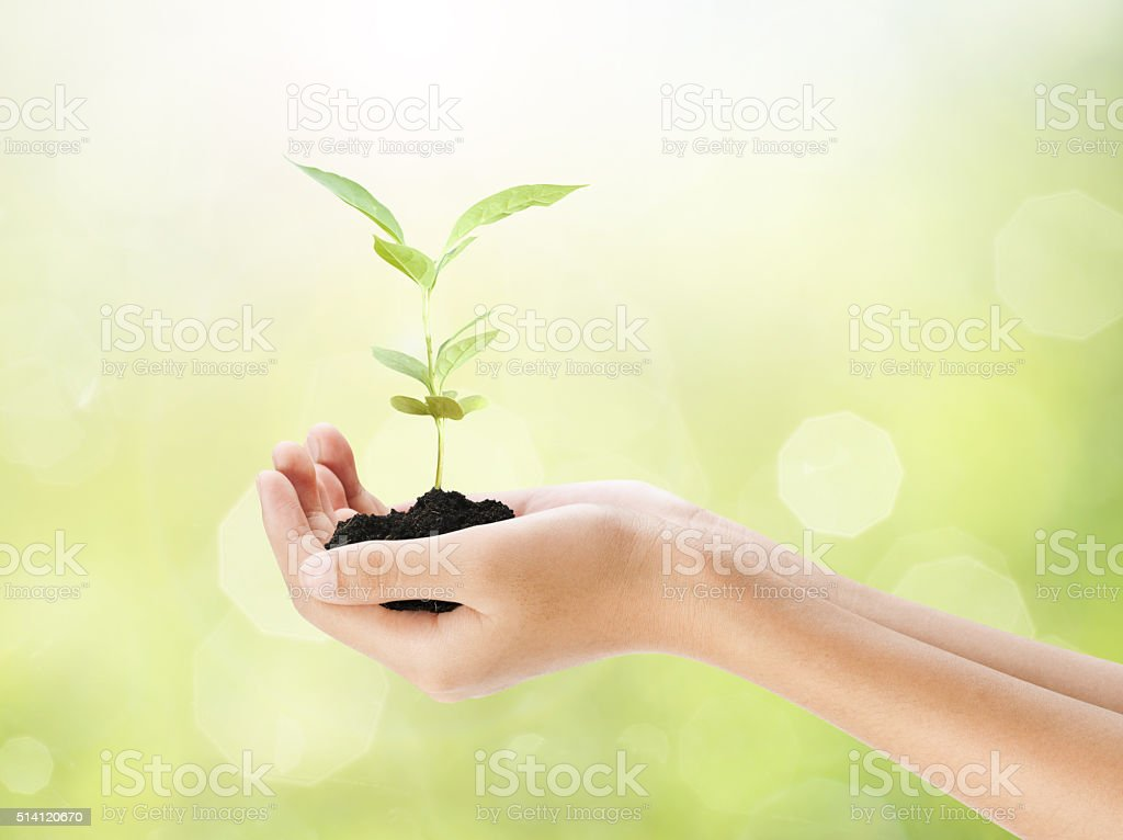 Hand holding plant on bokeh background stock photo