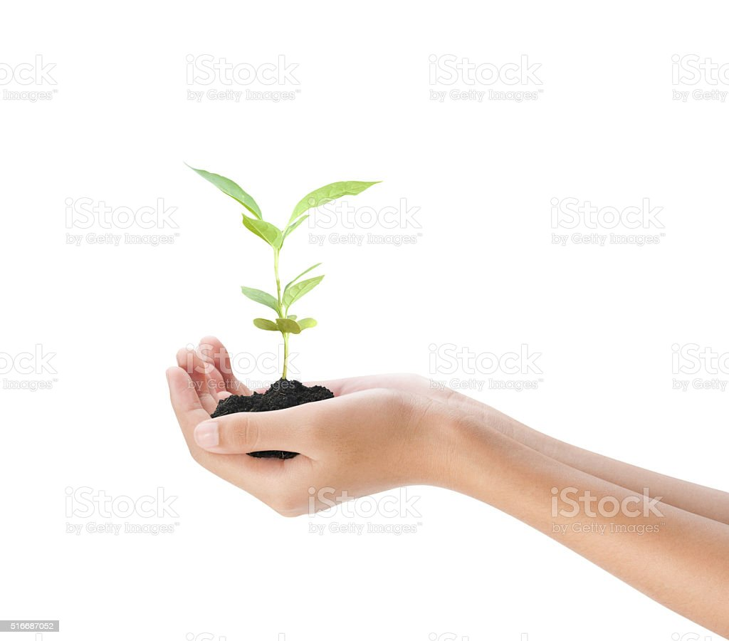 Hand holding plant on white background stock photo