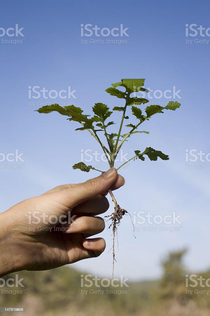 Hand holding plant stock photo