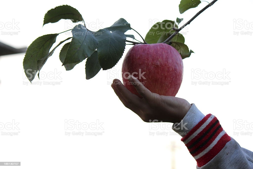 Hand holding red apple royalty-free stock photo