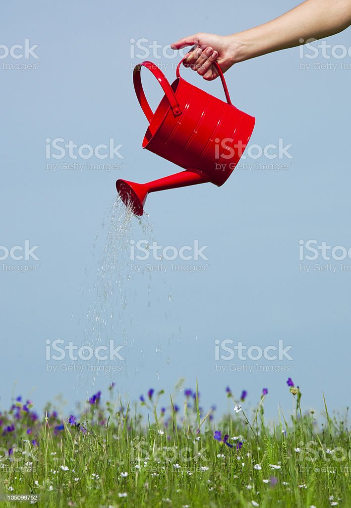 Hand holding red watering can on blue background royalty-free stock photo