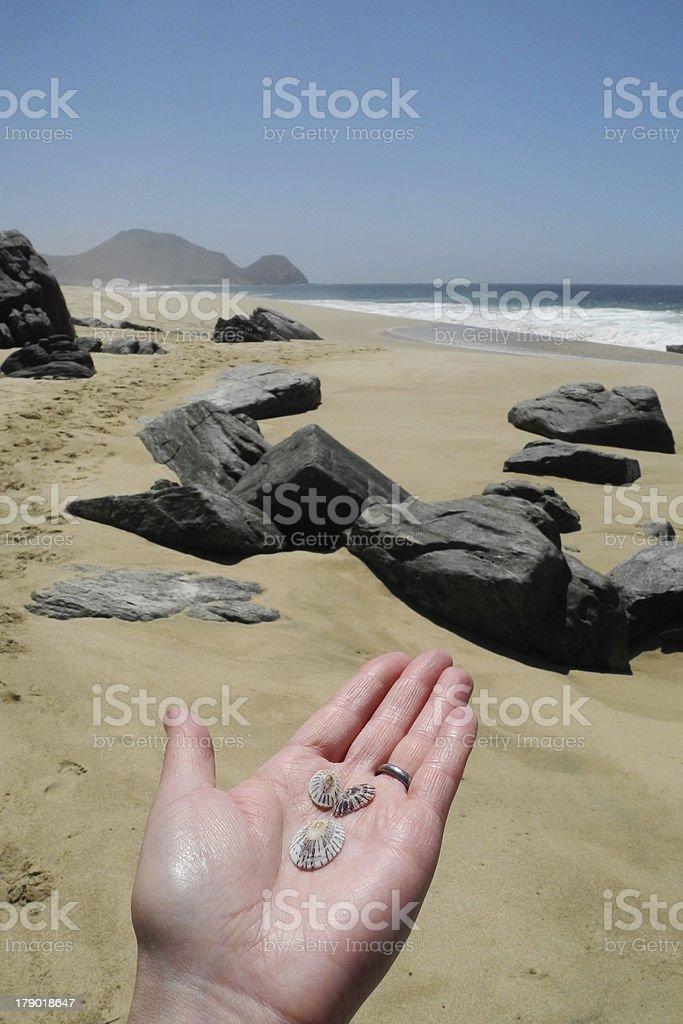 Hand Holding Shells royalty-free stock photo