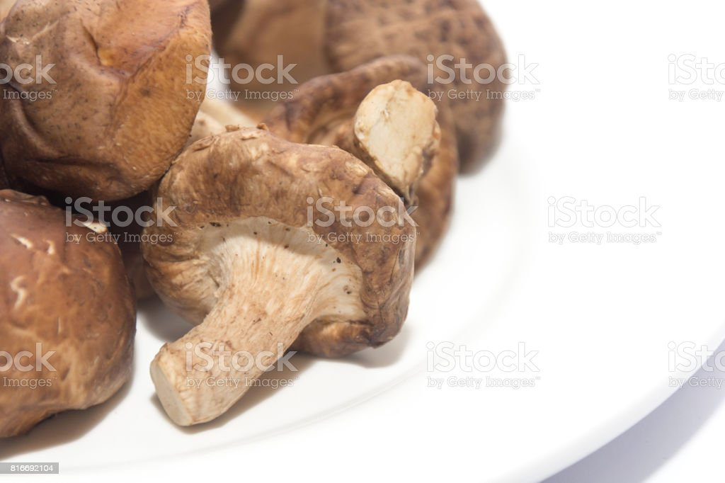 hand holding Shiitake Mushroom on white plate isolated on white stock photo