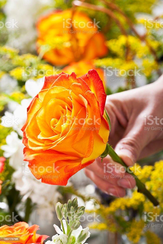 Hand holding stem of orange rose stock photo