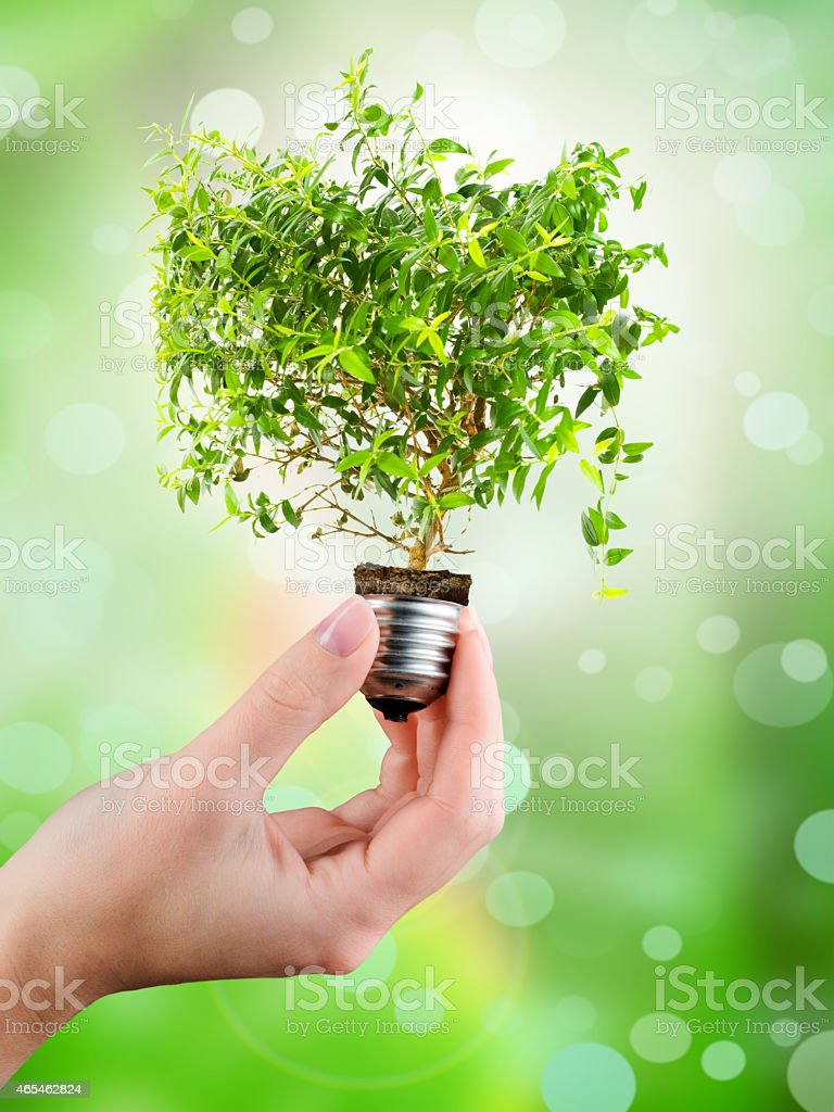 Hand holding the base of a lightbulb growing a plant stock photo