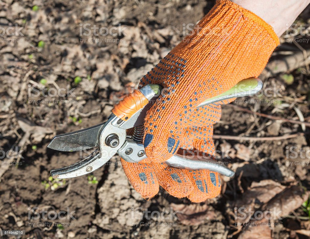 Hand holding the pruning shears stock photo