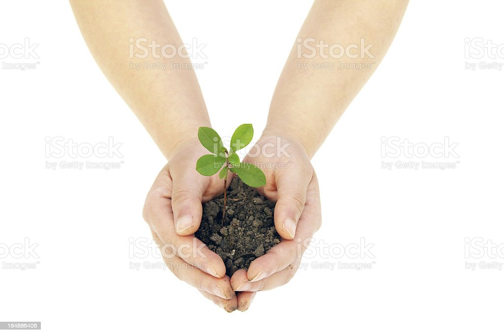 Hand holding the seed royalty-free stock photo