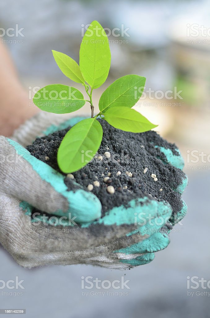 Hand holding tree growing with soil royalty-free stock photo