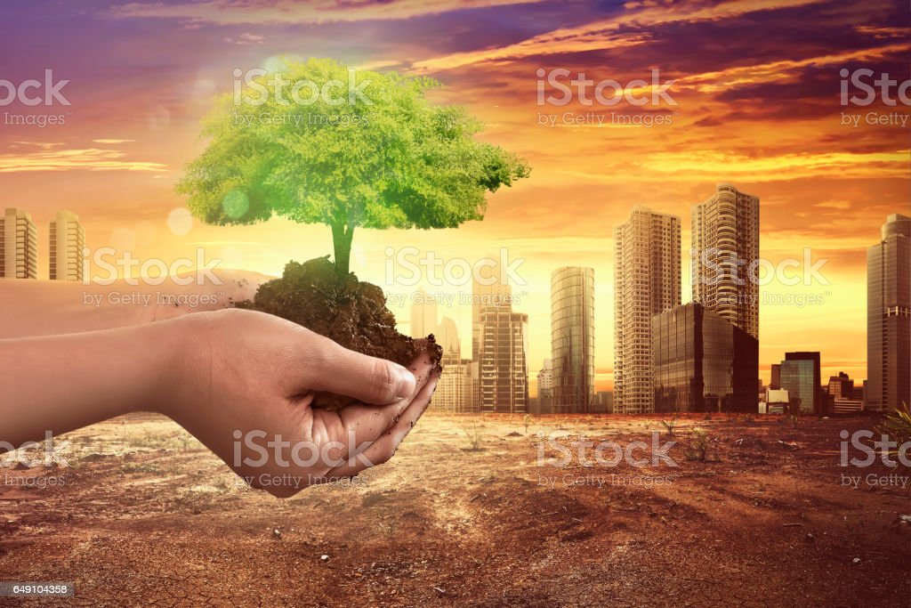 Hand holding tree plant on soil stock photo