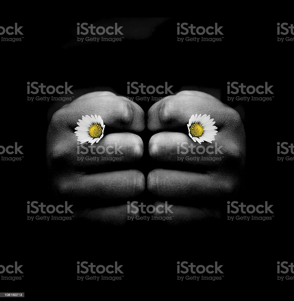 Hand Holding Two Small Daisy Flowers in Knuckles stock photo