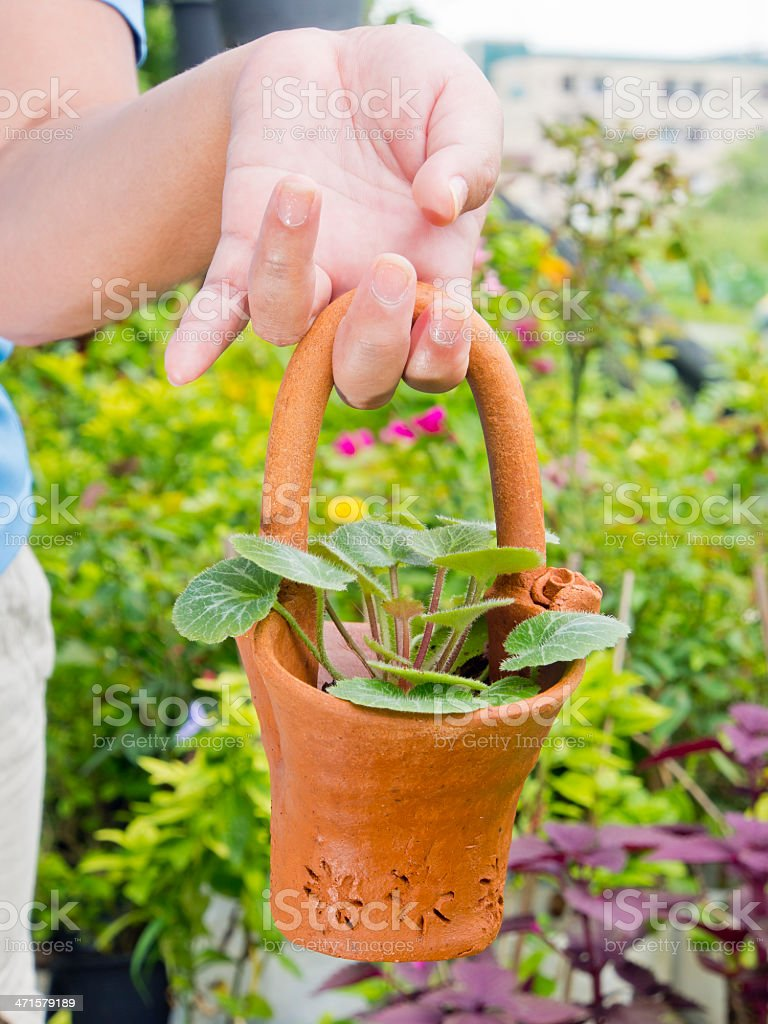 Hand holding up spring plant in pot royalty-free stock photo
