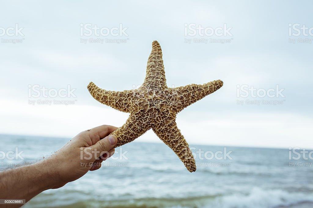 Hand holding up starfish on beach under blue sky. royalty-free stock photo