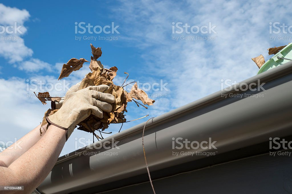 Hand holds leaves with blue sky stock photo
