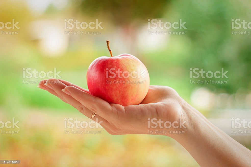 hand holds red Apple outdoors stock photo
