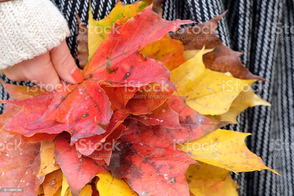 Hand holds yellow autumn leaves. Fall Fashion. stock photo